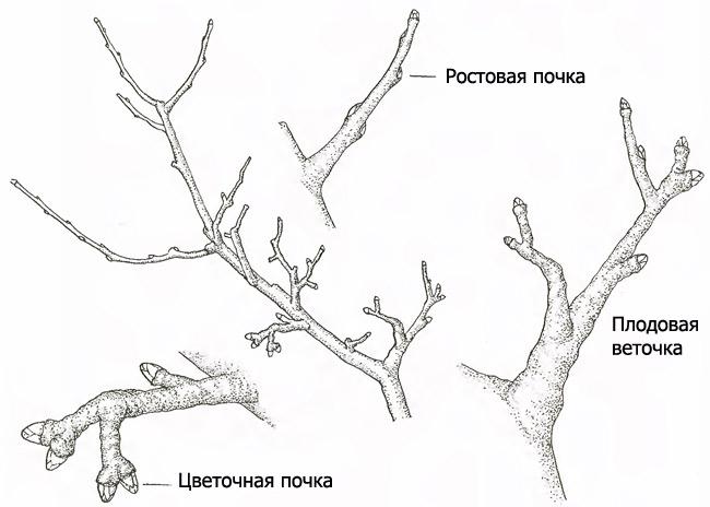 Обрезка дерева