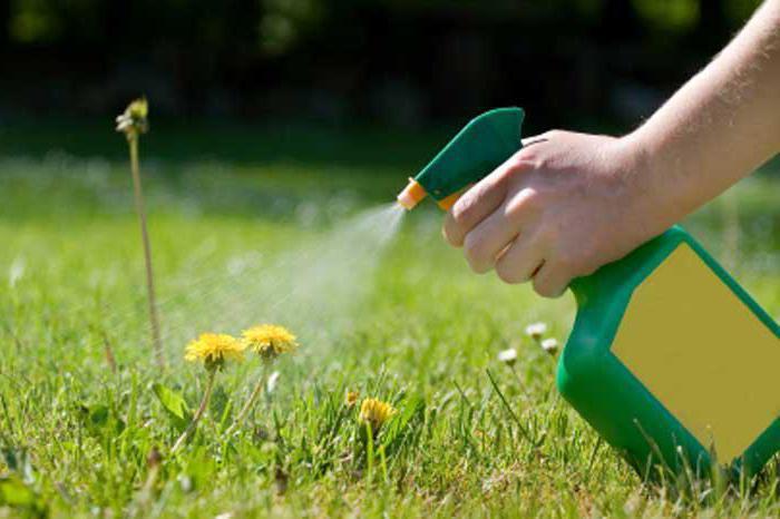 Уничтожение сорняков химией