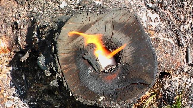 Выжигание пня