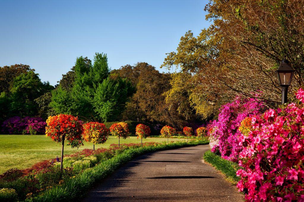 Обрезка кустарников и деревьев