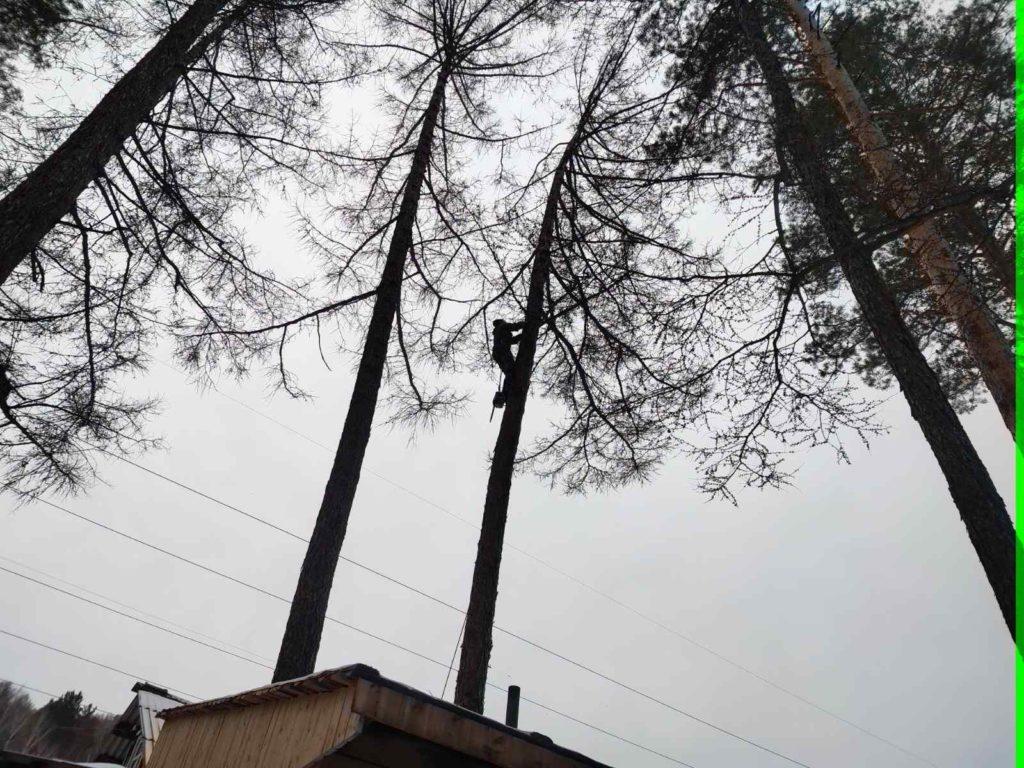 удаление дерева частями